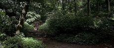 森の奥.jpg