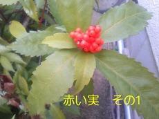PH_478.jpg